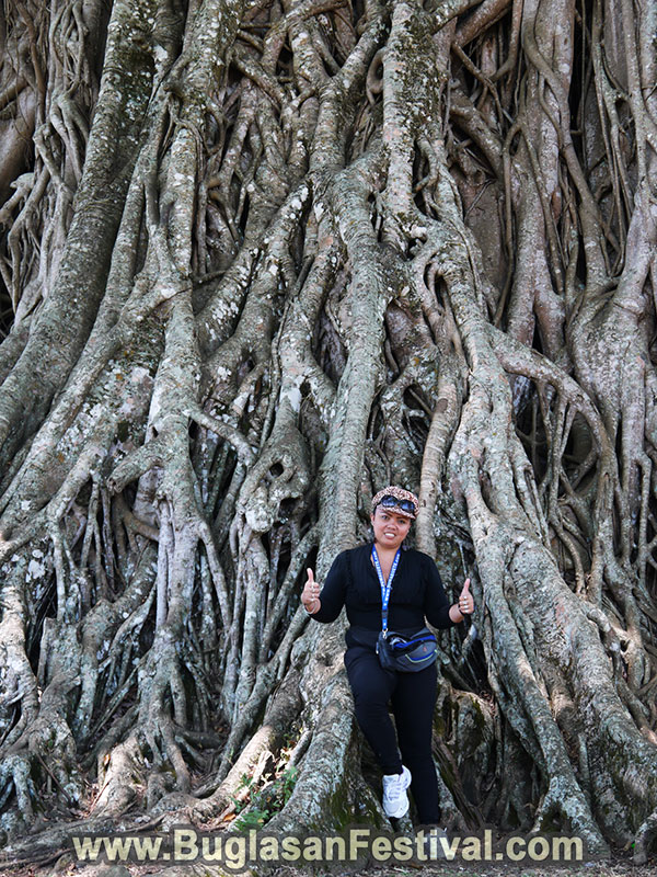 Canlaon City - Centuries Old Balete Tree