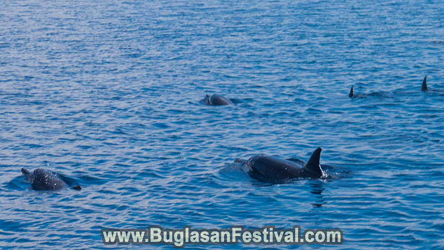 Dolphin Watching - Bais City - Negros Oriental