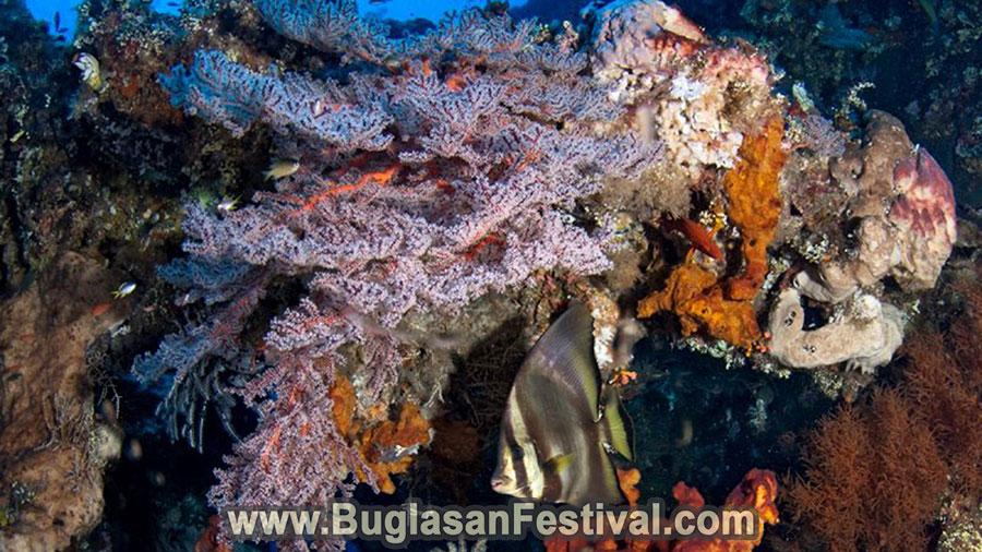 Tourist Spots in Dauin - Negros Oriental