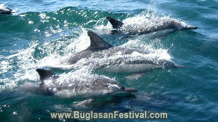 Dolphin Watching in Baic City - Negros Oriental